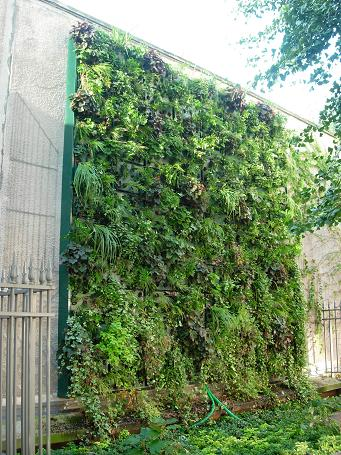 21 sept 2006 mur végétalisé